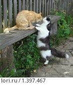 Рыжий кот и чёрно-белая кошка принюхиваются друг к другу на лавочке. Стоковое фото, фотограф Сметанова Наталия / Фотобанк Лори