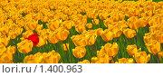 Купить «Красные и желтые тюльпаны», фото № 1400963, снято 9 мая 2009 г. (c) Алёшина Оксана / Фотобанк Лори