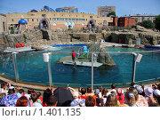 Дельфинарий (2008 год). Редакционное фото, фотограф Ольга Алиева / Фотобанк Лори