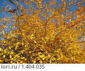 Вишня осенью. Стоковое фото, фотограф Евгений 333 / Фотобанк Лори