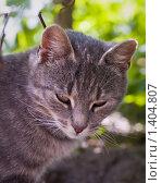Купить «Котенок», фото № 1404807, снято 28 июля 2007 г. (c) Евдокимова Мария Борисовна / Фотобанк Лори