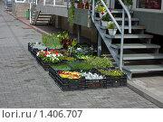 Торговля цветами. Стоковое фото, фотограф gooclia / Фотобанк Лори