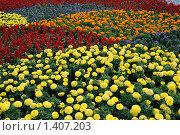 Купить «Цветочное поле», фото № 1407203, снято 12 июля 2009 г. (c) Евгений Дробжев / Фотобанк Лори