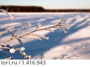 Зимнее утро. Стоковое фото, фотограф Александр Рюмин / Фотобанк Лори