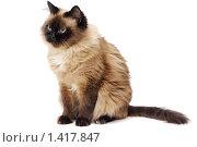 Купить «Кошка на белом фоне», фото № 1417847, снято 19 января 2010 г. (c) Галина Ермолаева / Фотобанк Лори