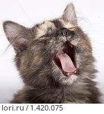 Купить «Зевающая кошка», фото № 1420075, снято 27 января 2010 г. (c) Антон Павлов / Фотобанк Лори