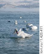 Купить «Птицы в Крыму», фото № 1420411, снято 26 января 2010 г. (c) Светлана / Фотобанк Лори