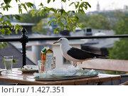 Купить «Чайка на столе», фото № 1427351, снято 8 августа 2009 г. (c) Анна Диордиева / Фотобанк Лори
