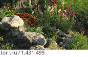 Купить «Сад», фото № 1431499, снято 21 августа 2009 г. (c) Арапова Ольга / Фотобанк Лори