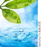 Купить «Капли воды стекают с мокрых листьев», фото № 1436615, снято 18 сентября 2019 г. (c) Andrejs Pidjass / Фотобанк Лори