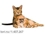 Купить «Кошка и щенок», фото № 1437267, снято 23 января 2010 г. (c) Vladimir Suponev / Фотобанк Лори
