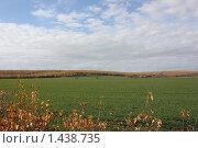 Зеленое поле. Стоковое фото, фотограф Юлия Кузнецова / Фотобанк Лори