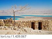 Засохшее дерево в крепости Масада около Мертвого моря, Израиль (2009 год). Стоковое фото, фотограф Михаил Марковский / Фотобанк Лори