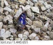 Синяя бабочка на фоне камней. Стоковое фото, фотограф Юлия Кузнецова / Фотобанк Лори