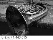 Валторна. Стоковое фото, фотограф Сунгатулина Эльвира / Фотобанк Лори