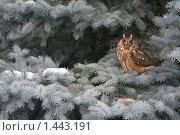 Сова на елке. Стоковое фото, фотограф Марина Рябущиц / Фотобанк Лори
