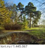 Купить «Сосны у обрыва в осеннем лесу», фото № 1445067, снято 24 января 2020 г. (c) Михаил Марковский / Фотобанк Лори