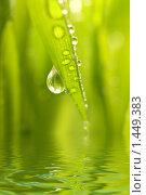 Купить «Зеленая трава с каплями росы», фото № 1449383, снято 20 января 2019 г. (c) Andrejs Pidjass / Фотобанк Лори