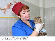 Купить «Женщина-ветеринар с кошкой в клинике», фото № 1449867, снято 7 июля 2009 г. (c) Галина Бурцева / Фотобанк Лори
