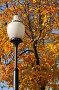 Фонарь на фоне осеннего дерева, эксклюзивное фото № 1450071, снято 18 октября 2009 г. (c) Alexei Tavix / Фотобанк Лори