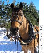 Купить «Лошадка», эксклюзивное фото № 1454151, снято 6 февраля 2010 г. (c) lana1501 / Фотобанк Лори