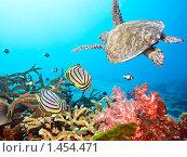 Черепаха и рыбы. Стоковое фото, фотограф Ольга Хорошунова / Фотобанк Лори