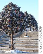Купить «Дерево с замками новобрачных на Лужковом мосту. Москва», фото № 1456639, снято 6 февраля 2010 г. (c) Екатерина Овсянникова / Фотобанк Лори