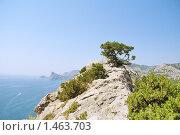 Пихта, растущая на вершине горы. Стоковое фото, фотограф Денис Аржаков / Фотобанк Лори