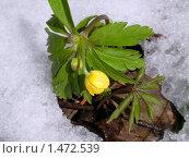 Купить «Лютик», фото № 1472539, снято 10 апреля 2007 г. (c) Кардаков Алексей Игоревич / Фотобанк Лори