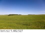 Зеленая трава и синее небо. Стоковое фото, фотограф Евгений Гультяев / Фотобанк Лори