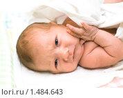 Купить «1-месячный малыш», фото № 1484643, снято 30 января 2008 г. (c) Svetlana Mihailova / Фотобанк Лори