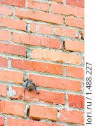 Летучая мышь на кирпичной стене. Стоковое фото, фотограф Tatiana / Фотобанк Лори