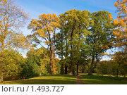 Осенний парк. Петергоф (2009 год). Редакционное фото, фотограф Катыкин Сергей / Фотобанк Лори
