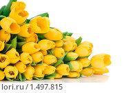 Букет тюльпанов. Стоковое фото, фотограф Виталий Радунцев / Фотобанк Лори