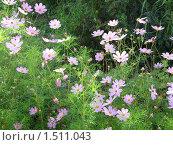 Розовые цветы. Стоковое фото, фотограф Неробова Лидия / Фотобанк Лори