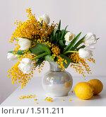 Купить «Натюрморт с букетом белых тюльпанов с мимозой в вазе и лимонами», фото № 1511211, снято 27 февраля 2010 г. (c) Julia Ovchinnikova / Фотобанк Лори