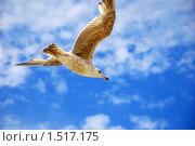 Чайка, парящая в облаках. Стоковое фото, фотограф Александр Букша / Фотобанк Лори