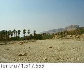 Пальмы в пустыне. Стоковое фото, фотограф Ирина Никитина / Фотобанк Лори