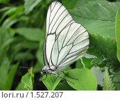 Бабочка на листе крупным планом. Стоковое фото, фотограф Дмитрий Редин / Фотобанк Лори