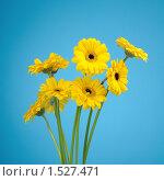 Купить «Букет желтых гербер на голубом фоне», фото № 1527471, снято 4 февраля 2010 г. (c) Виталий Радунцев / Фотобанк Лори