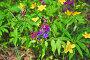 Цветочная поляна. Фрагмент, эксклюзивное фото № 1529083, снято 10 мая 2009 г. (c) Алёшина Оксана / Фотобанк Лори