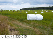 Купить «Упакованное в плёнку сено», фото № 1533015, снято 9 августа 2009 г. (c) Юрий Синицын / Фотобанк Лори