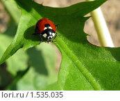 Купить «Божья коровка на зеленом листе в естественной среде обитания», фото № 1535035, снято 27 мая 2009 г. (c) Илья Андриянов / Фотобанк Лори