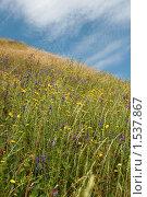 Поле цветов на фоне синего неба. Стоковое фото, фотограф вадим забудько / Фотобанк Лори