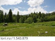 Купить «Лесная поляна», фото № 1543879, снято 29 июня 2008 г. (c) Картавкин Артем / Фотобанк Лори