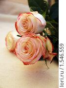 Купить «Розы на 8 марта», фото № 1546559, снято 8 марта 2010 г. (c) Ольга Долотина / Фотобанк Лори