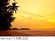 Купить «Силуэты пальм на пляже», фото № 1548223, снято 15 ноября 2009 г. (c) Бабенко Денис Юрьевич / Фотобанк Лори
