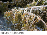 Купить «Оковы зимы», фото № 1564035, снято 11 марта 2010 г. (c) WalDeMarus / Фотобанк Лори
