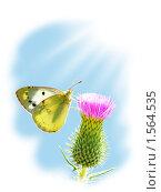 Купить «Бабочка, сидящая на цветке», фото № 1564535, снято 22 сентября 2019 г. (c) Бондарь Александр Николаевич / Фотобанк Лори