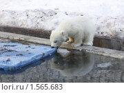 Купить «Медвежонок», фото № 1565683, снято 11 марта 2010 г. (c) Яременко Екатерина / Фотобанк Лори